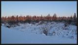 Early morning bog