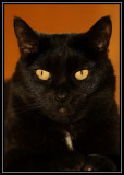Salem ©  Liz Stanley