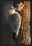 Woodpecker Marathon
