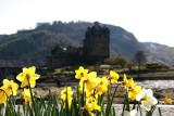 McDaff castle