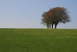 Teletubbies trees