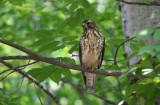 Quiz_Bird_3