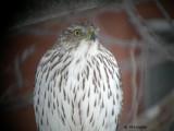 Oiseaux 2007