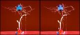 fotoopa D322283 3D crossview