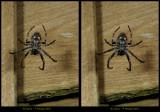 fotoopa D322872 spider