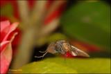 Fly_15738.jpg