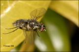 Fly_16418.jpg