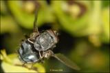 fly_16881