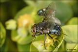 fly_16889