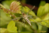fly_17069