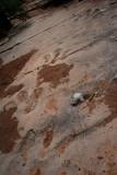 Dinosaur tracks