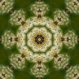 Dandelion 7.jpg