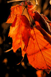 Warmth & color - inspite of November being dull & grey