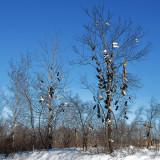 A peculiar tree decoration