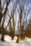 Wind in the trees