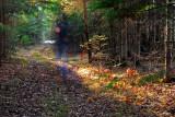 Treading lightly through the woods