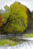 A burst of spring green