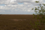 Everglades - General Views