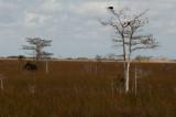 Everglades - General View