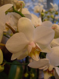 96 UP CLOSE ORCHID.jpg