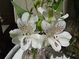 103 kind of lillies.jpg