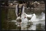 Will the goose escape?