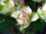 continental-rose-fractalius