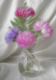 asters...