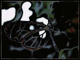 transparent-butterfly.jpg