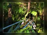 bush-entrance.jpg