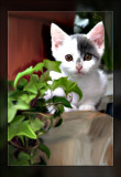 cute-kitty.jpg