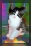 kitty-Kat.jpg