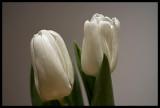 white ones