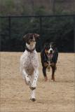 Gallery: Dog Park Friends