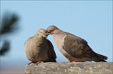 The Ground Birds