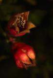 Winters Fruit