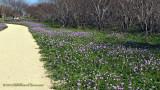 Jog/Walk with Wildflowers