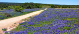 Threadgill Creek RD Bluebonnets