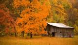 Autumn Barn • RT 93 near Scherr, WV