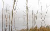 Kimseys Run Lake • Lost River, WV