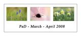 PAD March - April 2008