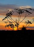 Sunset In Roztocze