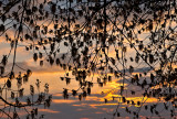 Spring Twigs In Sunset