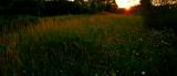 Grass Of The Setting Sun