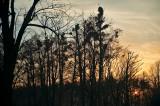 Mistletoe Sunset