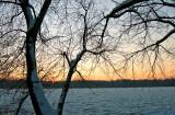 Sun Setting In The Tree