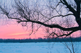Sunset Under The Tree