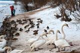 Birds At The Riverbank