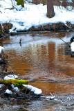 ACTION: Winter Creek Flow