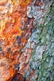 Pine Bark Different  Colors